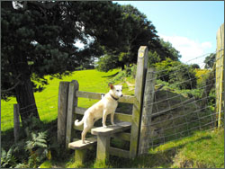 Dog-friendly Offa's Dyke Walking Tour - for stile-loving dogs!